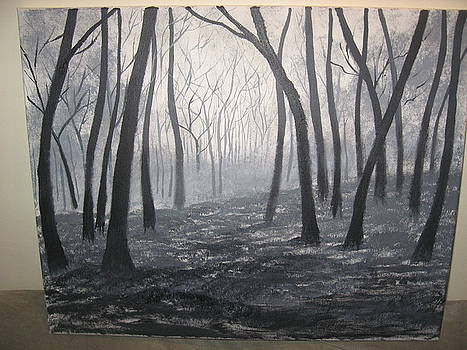 Peaceful forest by Jim Carreau