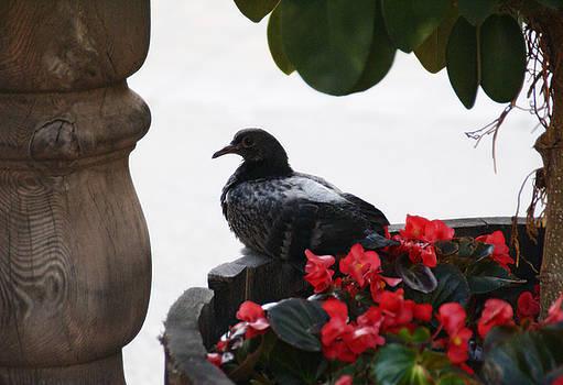 Linda Knorr Shafer - Peaceful Garden