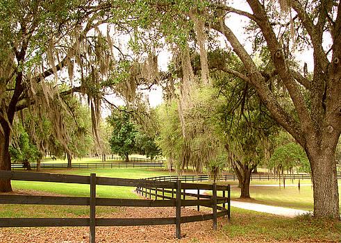 Peaceful Park by Adele Moscaritolo