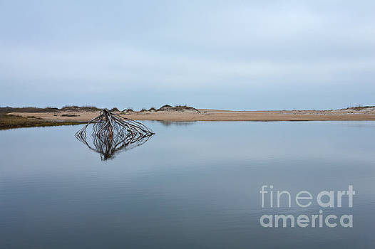 Dan Carmichael - Peaceful Tidepool on the Outer Banks