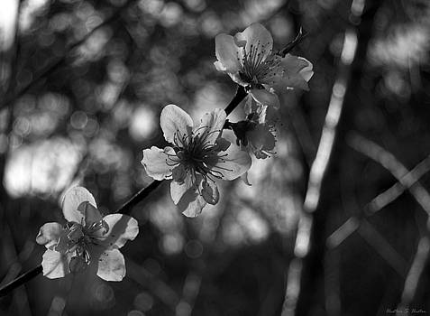 Peach Blossoms by Heather S Huston