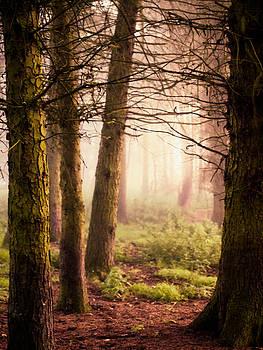 Peach mist by Susan Tinsley