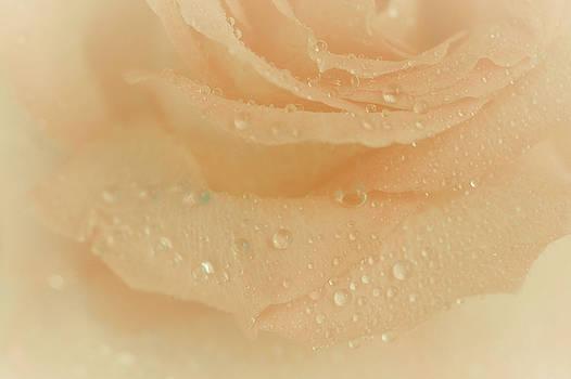 Peach Nectar by The Art Of Marilyn Ridoutt-Greene
