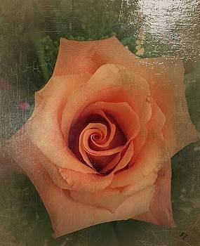 Peach Rose by Marian Palucci-Lonzetta