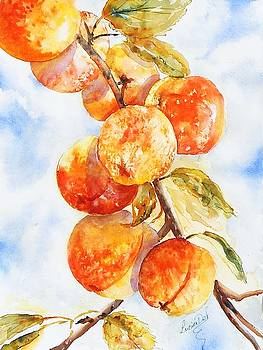Peaches Without Cream by Lucia Del