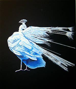 Peacock 2 by Chris Benice
