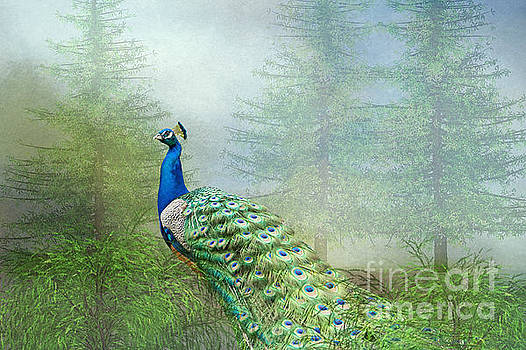 Peacock in the Forest by Bonnie Barry