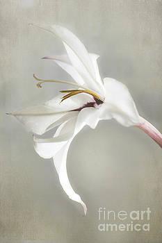 Elena Nosyreva - Peacock orchid