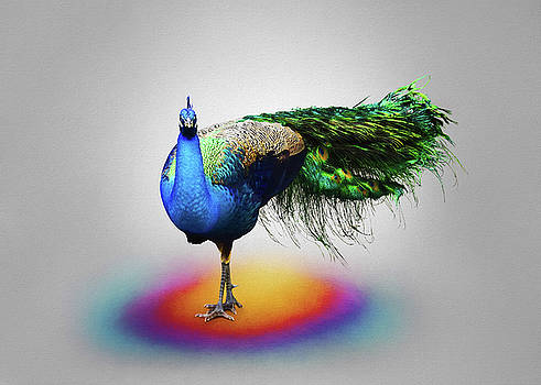 Peacock Pose by Steven Michael