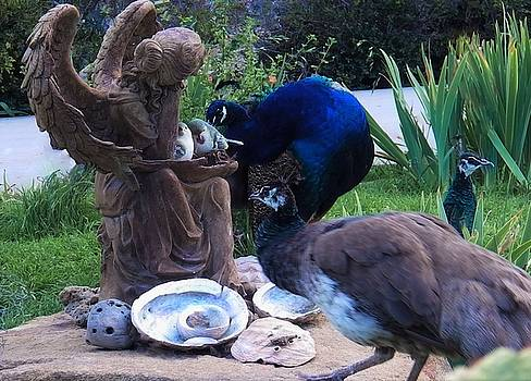 Peacocks and Peahens in the Gardens by Jan Moore