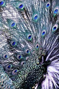 Peacock's Feathers by Joachim G Pinkawa