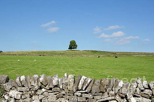 Peak District landscape by Steev Stamford