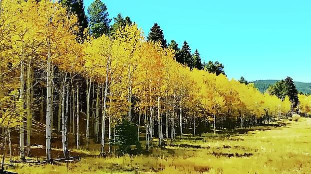 Peak to Peak Highway Beauty by Joseph Hendrix