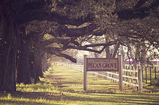 Pecan Grove  by Alicia Morales