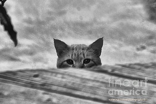 Peek a Boo by Carole Martinez