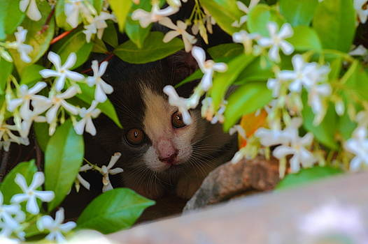 Peek-a-boo by Richard Patmore
