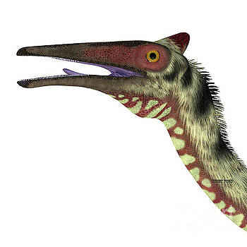 Corey Ford - Pelecanimimus Dinosaur Head