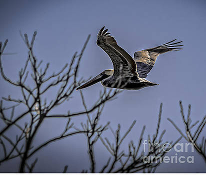 Pelican Breezin Thru The Trees by Crissy Anderson