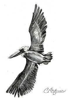 Pelican capers by Carol Allen Anfinsen