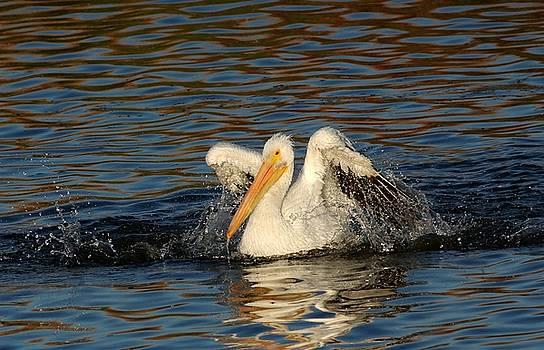 Pelican Clean by Elka Lange