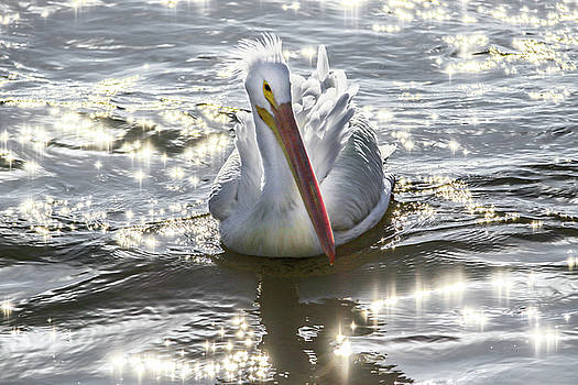 Pelican Dream by Ray Congrove