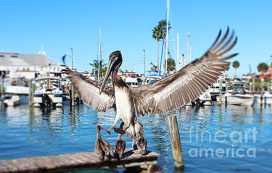 Pelican Flying In by Megan Dirsa-DuBois