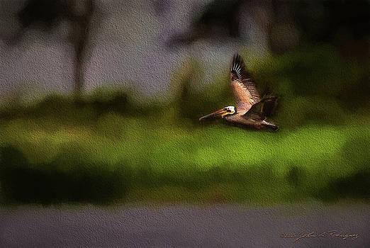 Pelican In Flight by John A Rodriguez