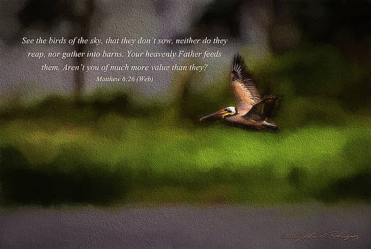 Pelican In Flight With Bible Verse by John A Rodriguez