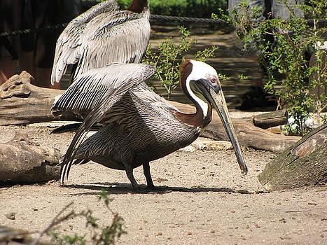 Pelican Island by Martha Ayotte