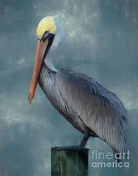 Pelican Portrait by Benanne Stiens