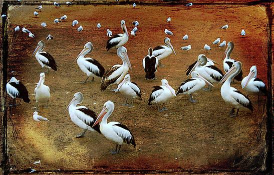 Pelican Scoop by Margaret Hormann Bfa