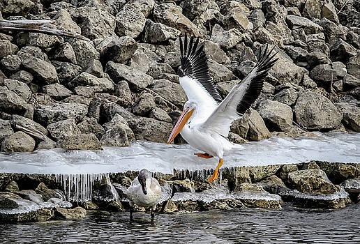 Pelican Slip by Ray Congrove