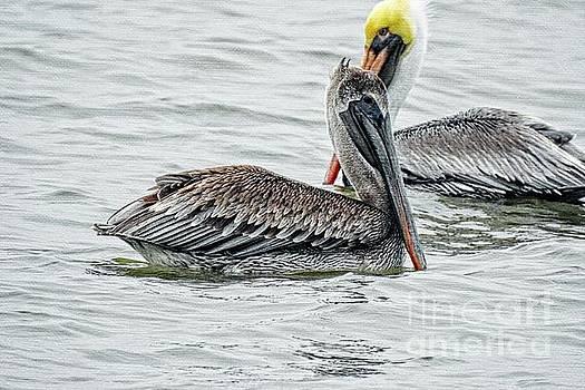 Pelicans on Canvas by Ella Kaye Dickey