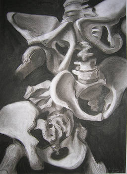Pelvis Skeletal Study by Candace Barnett
