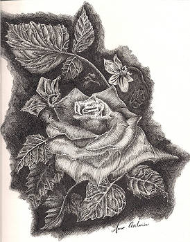 Pen And Ink Rose by Marco  Antonio