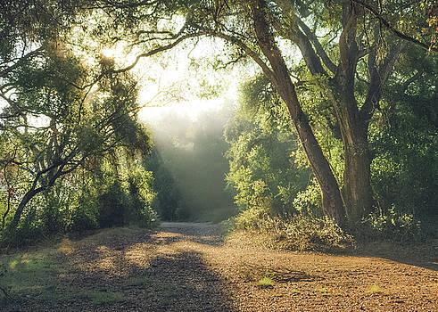 Penasquitos - Backlit Trail by Alexander Kunz