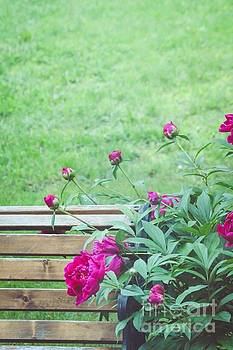 Peonies At The Park by Lauren Maki