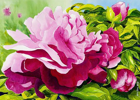 Peonies in Pink by Janis Grau