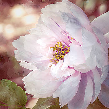 Julie Palencia - Peony in Pink
