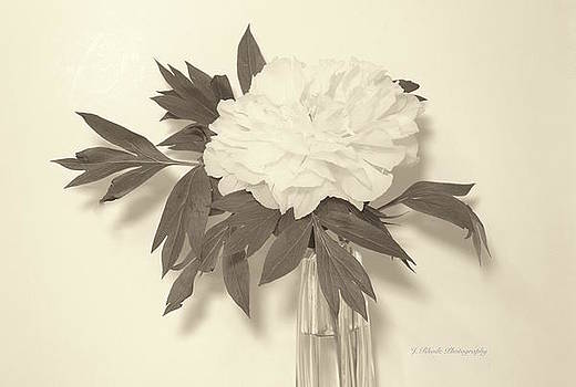 Peony in Soft Sepia by Jeannie Rhode Photography