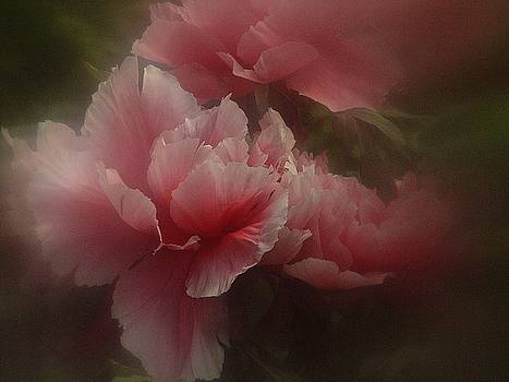 Peony Magic by Richard Cummings