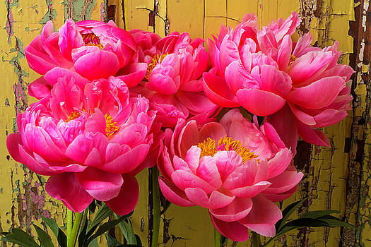 Peony's Against Yellow Wall by Garry Gay