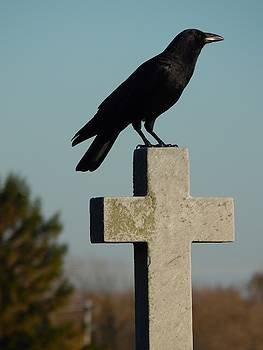 Perch Of A Gothic Bird by Gothicrow Images