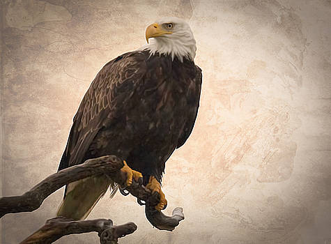 Perched Eagle by Randy Hall