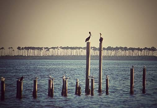 Perched Pelicans  by Susan Bordelon