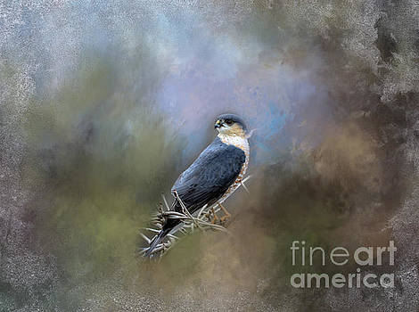 Peregrine Falcon by Brenda Bostic