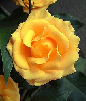 Kae Cheatham - Perfect Bloom