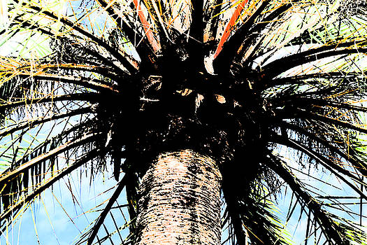 Perfect Palm by Nanette Hert
