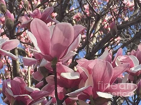 Perfect Pink Petals by Barbara Plattenburg