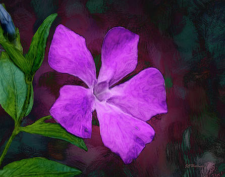 Periwinkle by Joe Halinar
